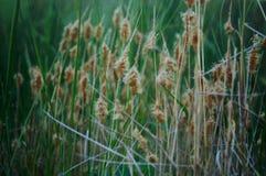 Silhuetas de Palm Desert Foto de Stock