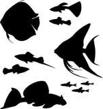 Silhuetas de peixes do aquário Imagem de Stock Royalty Free