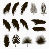 Silhuetas de tropical e de folhas de palmeira Grupo de folha exótica isolada das plantas da selva ilustração monocromática tirada ilustração royalty free