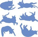 Silhuetas de um azul de reclinação do gato Foto de Stock
