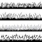 Silhuetas de várias ervas com spikelets Fotografia de Stock