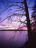 Silhuetas desencapadas de uma árvore contra um por do sol colorido Fotografia de Stock Royalty Free