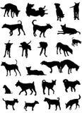 Silhuetas do cão Fotografia de Stock