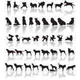Silhuetas do cão Foto de Stock Royalty Free