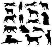 Silhuetas do cão Imagem de Stock