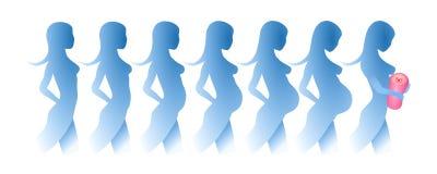 Silhuetas do desenvolvimento de uma gravidez ilustração stock