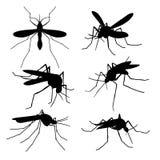 Silhuetas do mosquito do close up isoladas Grupo macro do vetor dos mosquitos do voo ilustração do vetor