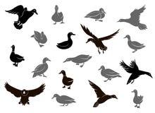 Silhuetas do pato isoladas no fundo branco ilustração stock