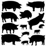 Silhuetas do porco
