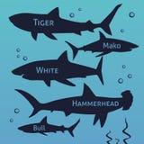 Silhuetas do vetor do tubarão ajustadas Peixes de mar, natação animal, ilustração da fauna Fotografia de Stock