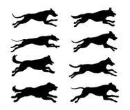 Silhuetas dos cães running Imagem de Stock