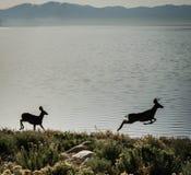 Silhuetas dos cervos Foto de Stock Royalty Free