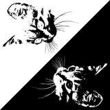 Silhuetas dos gatos no fundo branco e preto Vetor Imagens de Stock Royalty Free