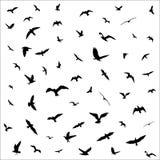 Silhuetas dos pássaros de voo no fundo branco Fotos de Stock Royalty Free