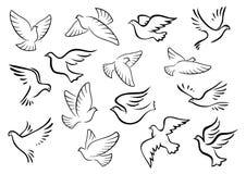 Silhuetas dos pássaros do pombo e da pomba Fotografia de Stock Royalty Free
