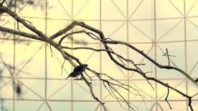 Silhuetas dos pássaros no fundo do lago Os raios mornos da manhã do sol são refletidos na água O pássaro é filme