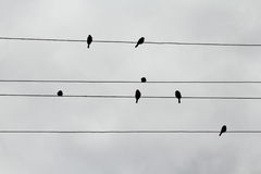 Silhuetas dos pardais nos fios que olham como notas musicais Imagens de Stock Royalty Free