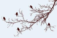 Silhuetas dos pardais nos ramos de árvore Foto de Stock