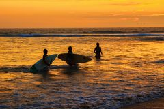 Silhuetas dos pares de surfistas novos com as prancha no oceano durante o por do sol Imagens de Stock