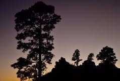 Silhuetas dos pinheiros, Pilancones, Gran canaria Foto de Stock