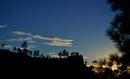 Silhuetas dos pinhos no por do sol Fotografia de Stock Royalty Free