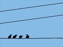Silhuetas dos pombos que sentam-se nos fios Ilustração Stock