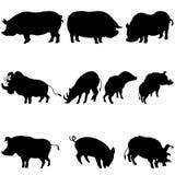 Silhuetas dos porcos e dos varrões ajustadas Imagem de Stock