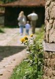 Silhuetas e flor da família Fotografia de Stock
