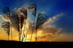 Silhuetas e por do sol da grama Foto de Stock Royalty Free