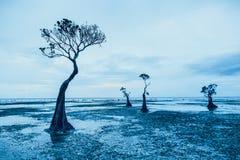 Silhuetas graciosas das árvores dos manguezais Sumba imagem de stock royalty free
