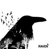 Silhuetas isoladas da cabeça do corvo com efeito da exposição dobro Fotografia de Stock Royalty Free