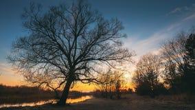 Silhuetas pretas escuras das árvores sem folhas em um fundo do céu adiantado vibrante bonito do por do sol da mola nave video estoque