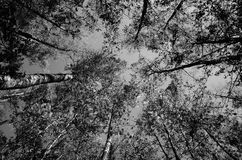 Silhuetas preto e branco das árvores imagens de stock