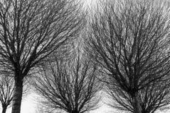 Silhuetas preto e branco das árvores fotografia de stock royalty free