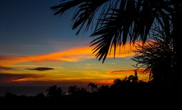 Silhuetas tropicais que apreciam cores foto de stock royalty free