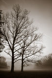 silhuette结构树 免版税图库摄影