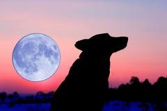 silhuette волка завывать стоковые изображения
