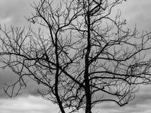Silhuette del árbol blanco y negro Fotografía de archivo