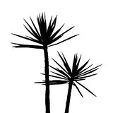 Silhuette Palm on the white background Stock Photo