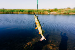 Silicon pike fishing lure Stock Photo