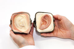 Silicone Made Human Ear in Plaster Form Royalty Free Stock Image