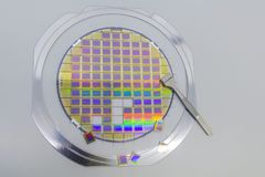Silikonr?n med mikrochipers som fixas i en h?llare med en st?lram p? en gr? bakgrund efter processen av att t?rna microchip arkivfoto