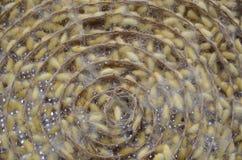 silk глисты Стоковое Изображение RF