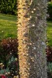 Silk дерево зубочистки Стоковое Изображение RF