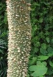 Silk ствол дерева зубочистки Стоковые Фото