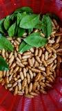 Silk черви в корзине с зелеными листьями Стоковые Изображения