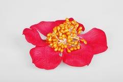 Silk blomma royaltyfri foto