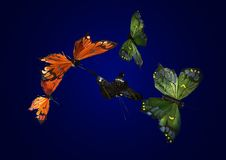 Silk butterflies Stock Image