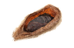 Silk Cocoon Stock Photography