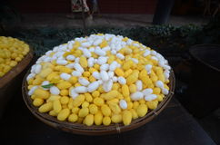 Silk cocoons Royalty Free Stock Photography